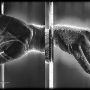 Corpo humano digitalizado