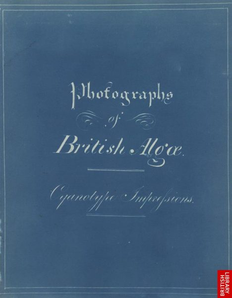 Photographs of British algae. Cyanotype impressions.