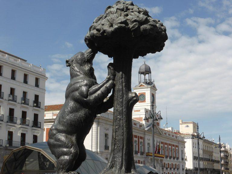 Urso e Medronheiro Madrid