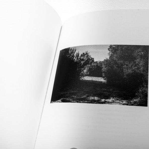 Arlindo Pinto Fotografia de Autor Vegetação com Sombra e sol em Catálogo de Silêncios
