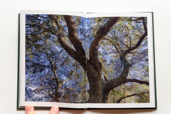 livro SO.LE.DA.DE de José Morujão